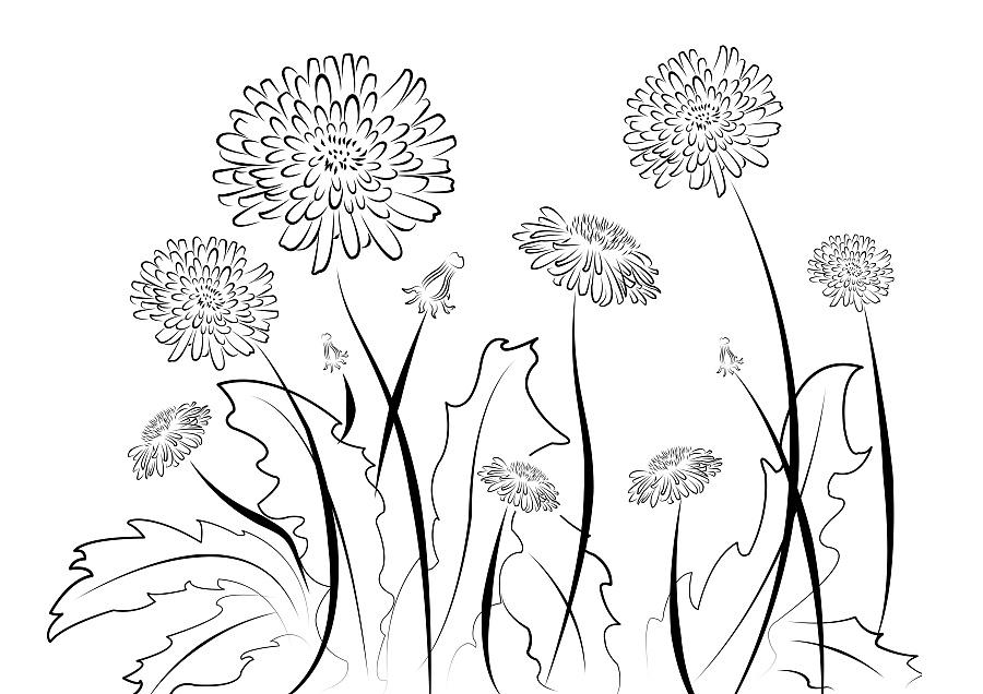 蒲公英花 商业插画 插画 叩沁插画 - 原创设计作品