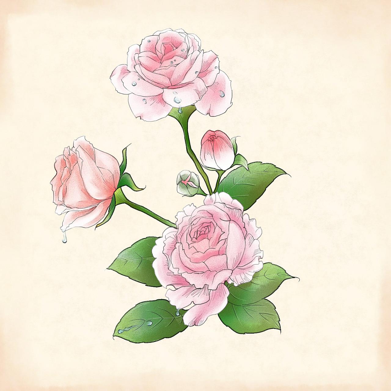 一些植物插画|插画|商业插画|ms西子西 - 原创作品