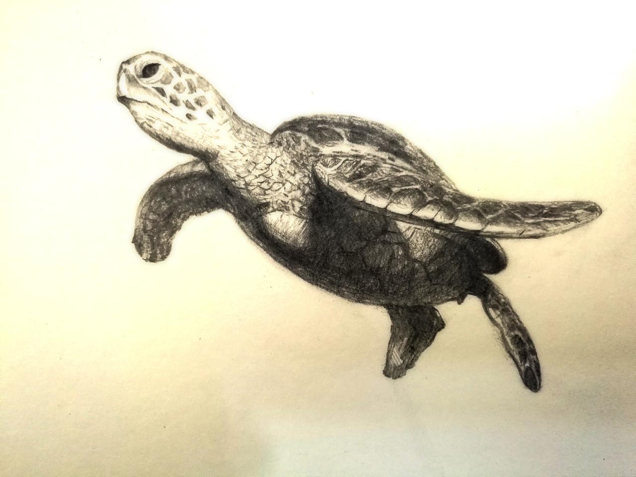 手绘大海龟