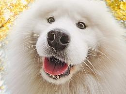 real smile笑的渐进式【动物摄影师何某某个人作品25】