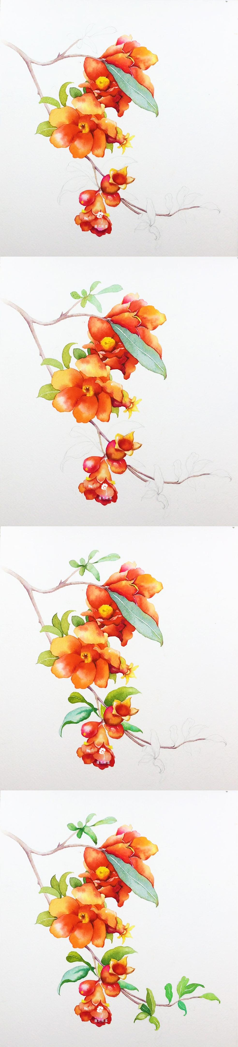 【水彩手绘】《石榴花》『蒲之未落水彩欣赏』