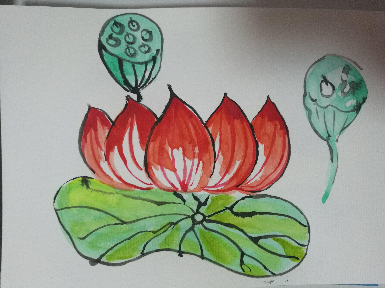 小练习:手绘夏日荷花  插画 插画习作 吹海听风