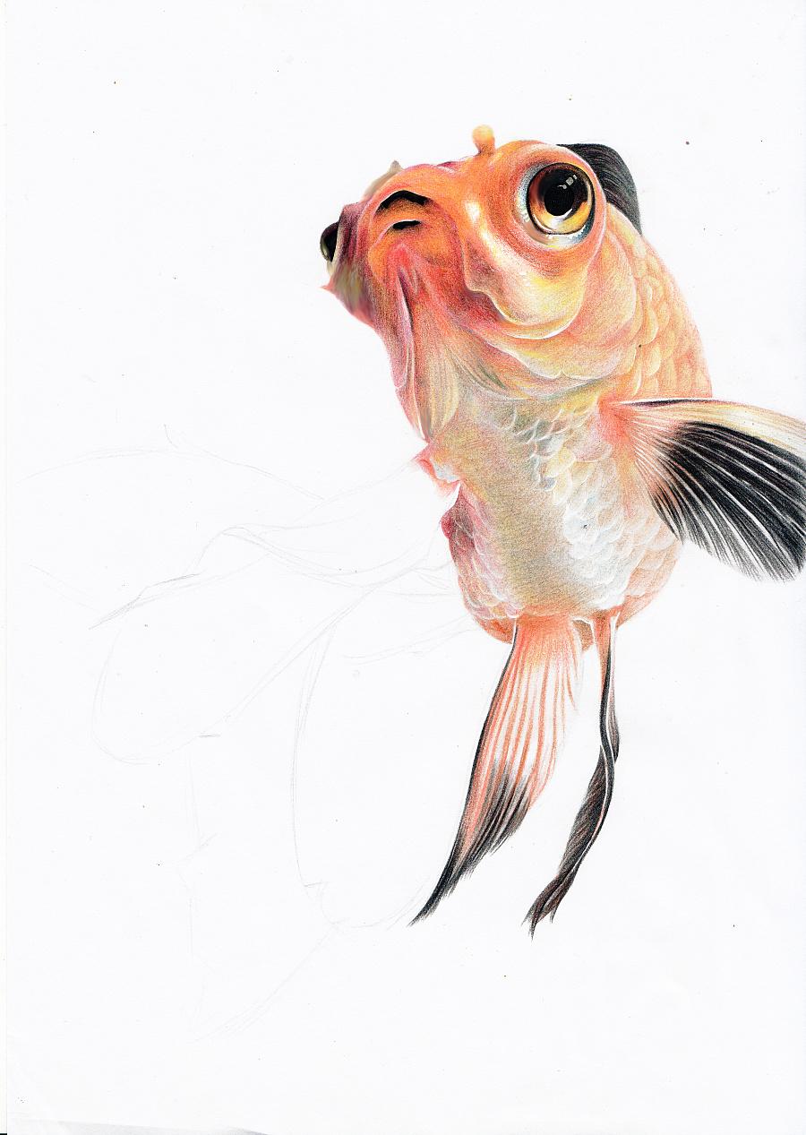 手绘金鱼|彩铅|纯艺术|henry凡 - 原创设计作品