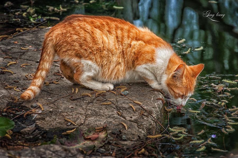 流浪猫|动物|摄影|若佶 - 原创设计作品 - 站酷