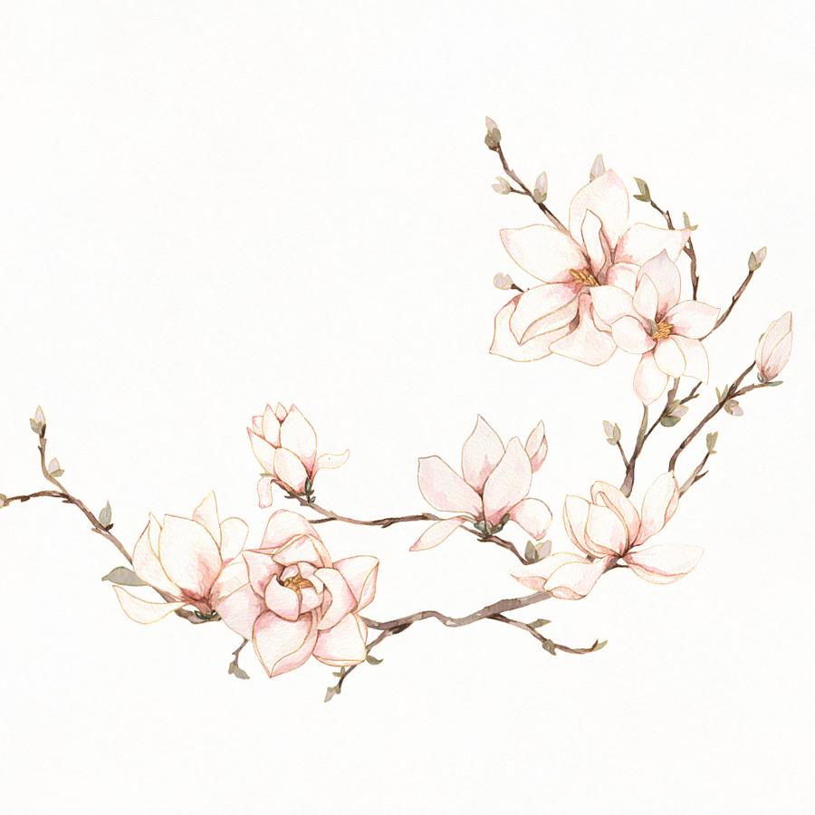 水彩花卉|绘画习作|插画|枣铃