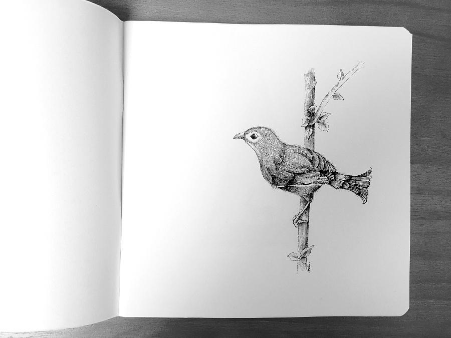 动植物-黑白插画