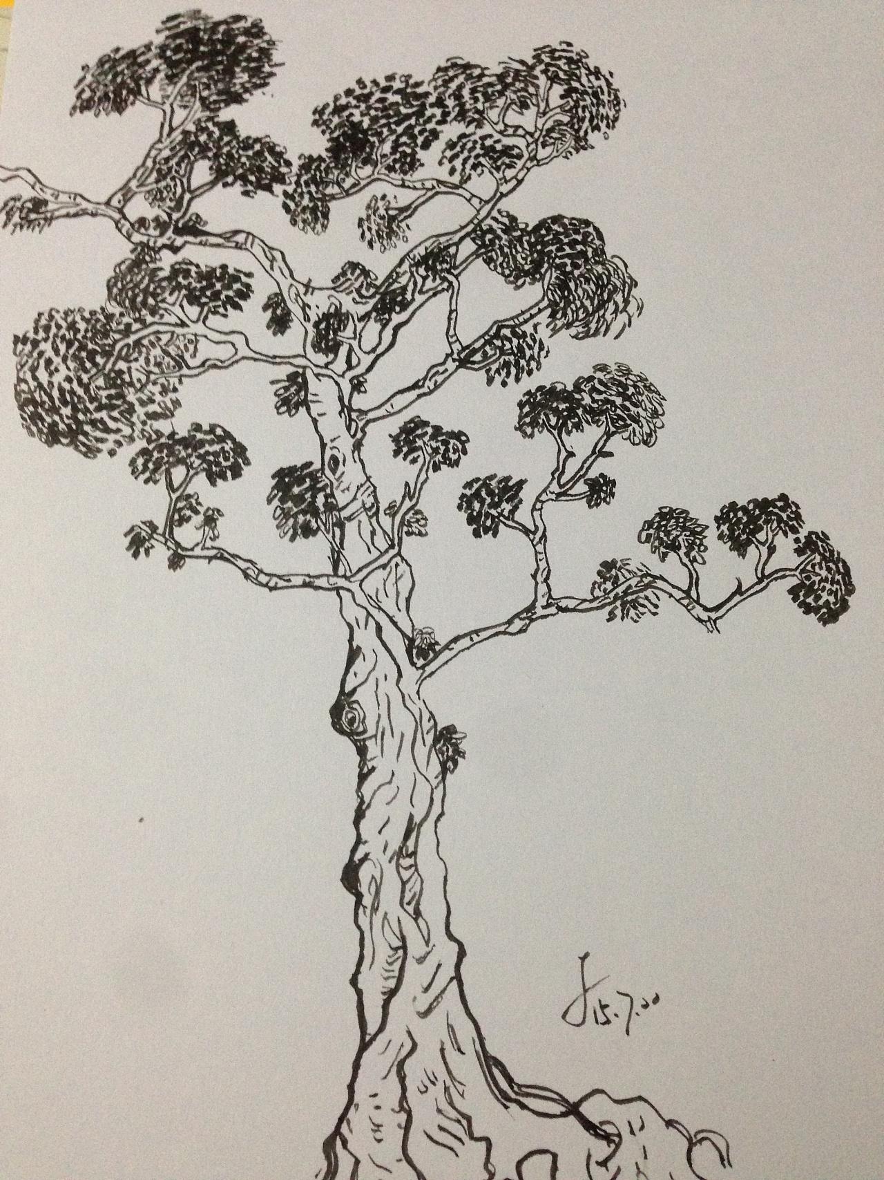 老树简笔画图片