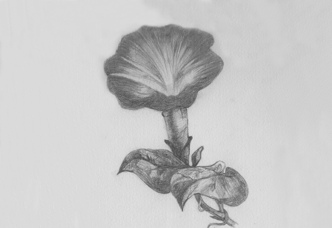 手绘(纸笔)-彩铅,素描,速写,水粉,钢笔画,构成图
