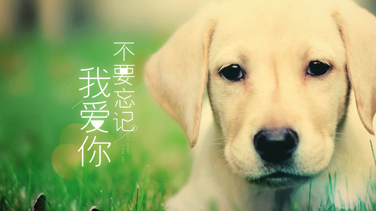 在电视剧《神犬小七》中的插曲叫什么名字?