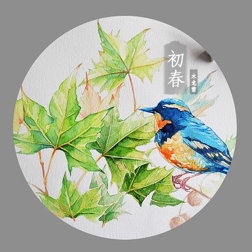 原创手绘水彩插画【青桐】青鸟梧桐叶|商业插画|插画