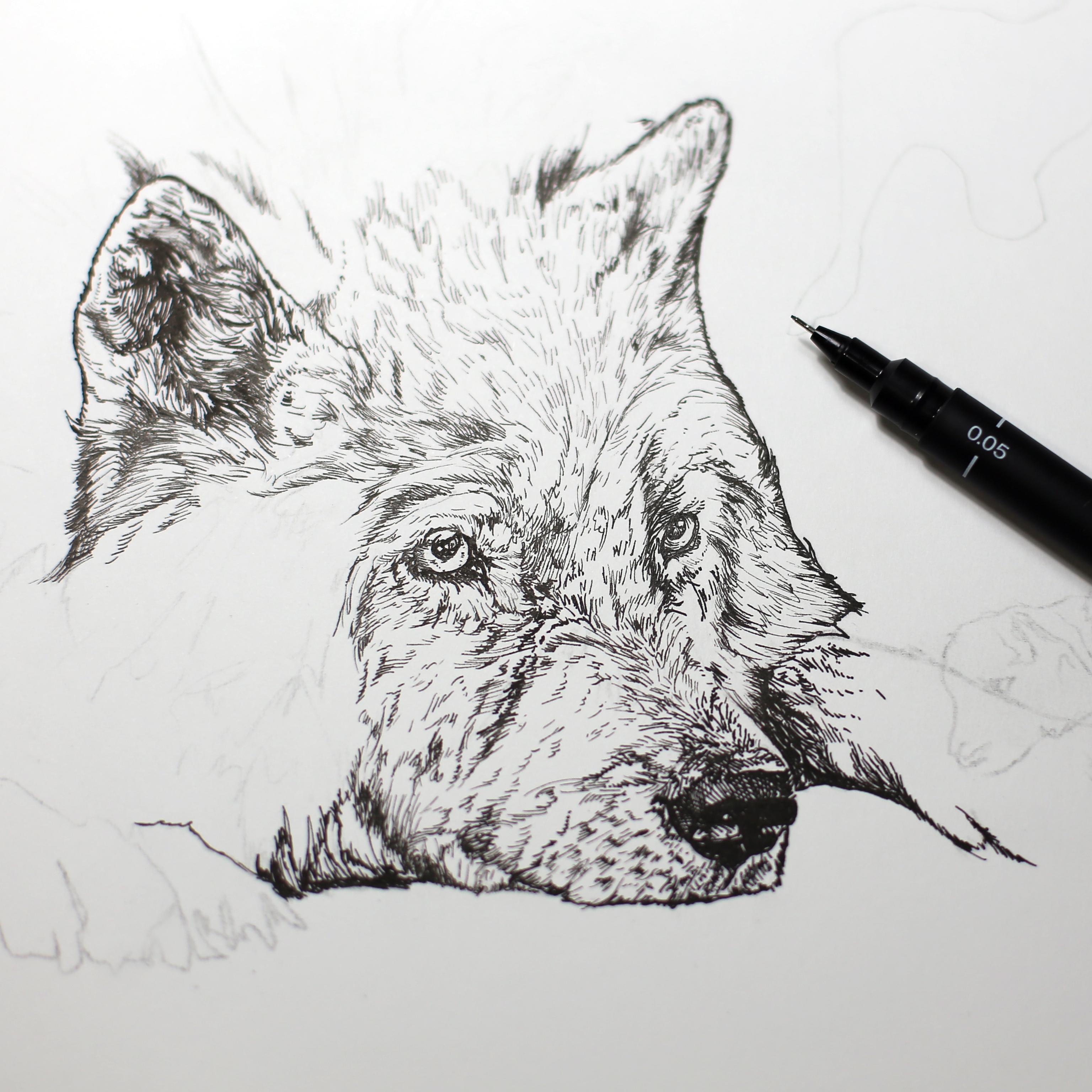 手绘动物插画(3)