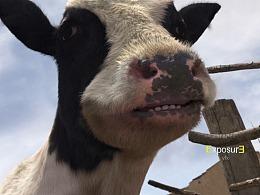 动物还会歌唱?可口可乐广告精彩片段