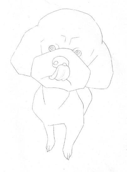 教程:彩色铅笔画步骤教程:泰迪熊犬的画法 (原创文章)