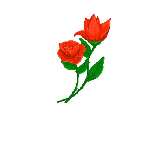 手绘板作画--花