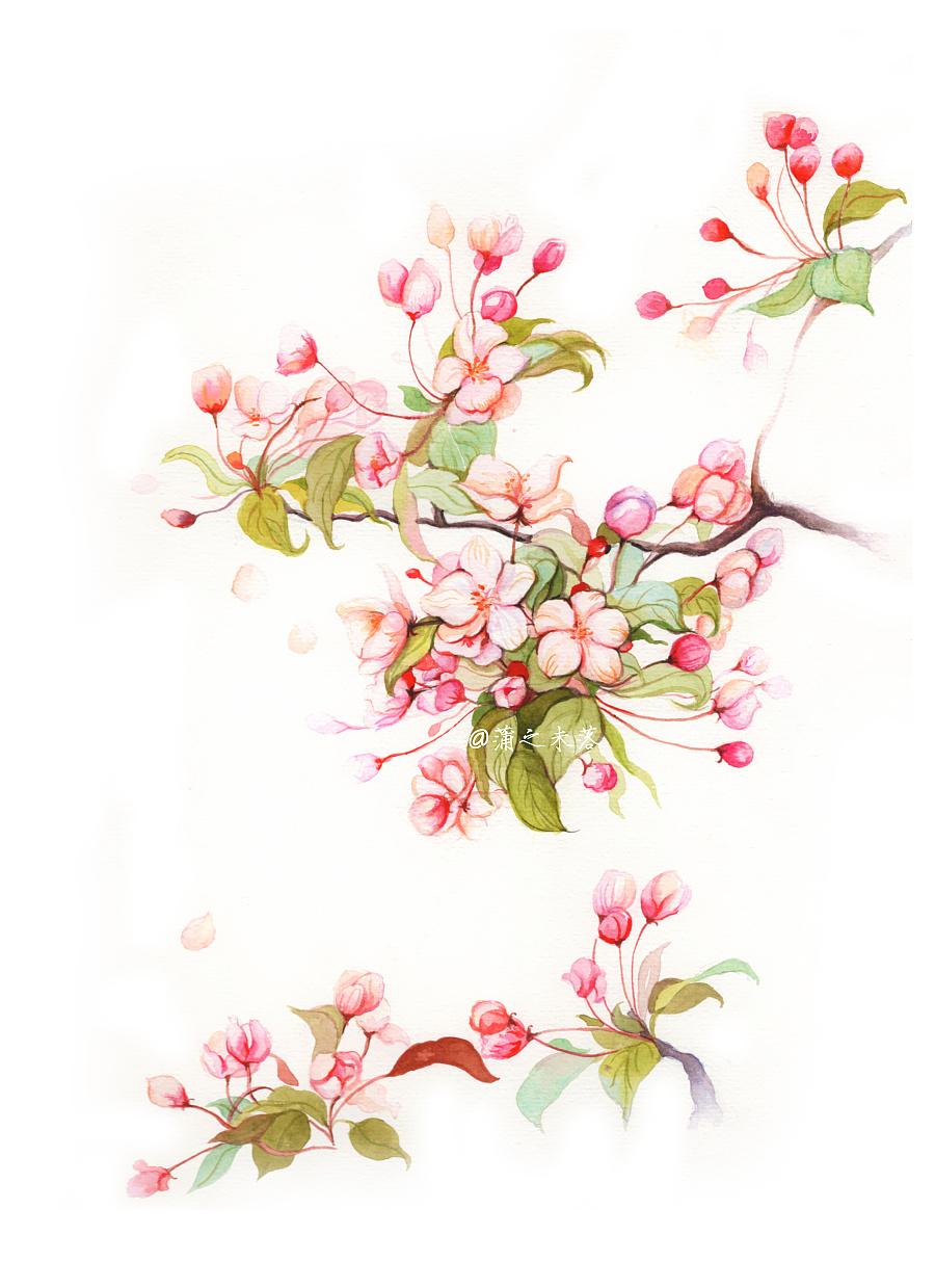 水彩手绘—【花卉 垂丝海棠】