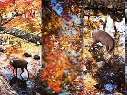 林深见鹿——秋日的救赎