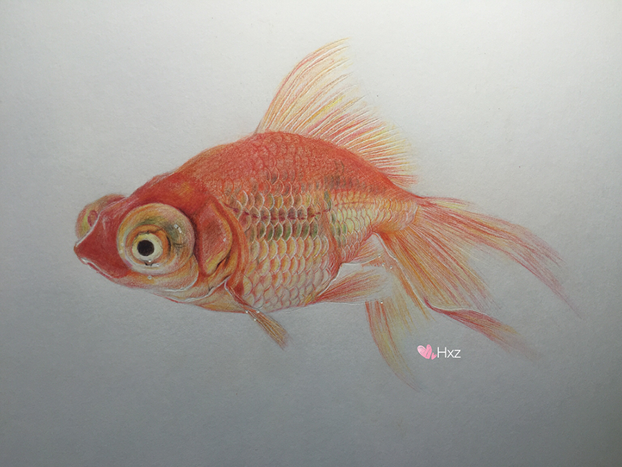 彩铅-《金鱼》