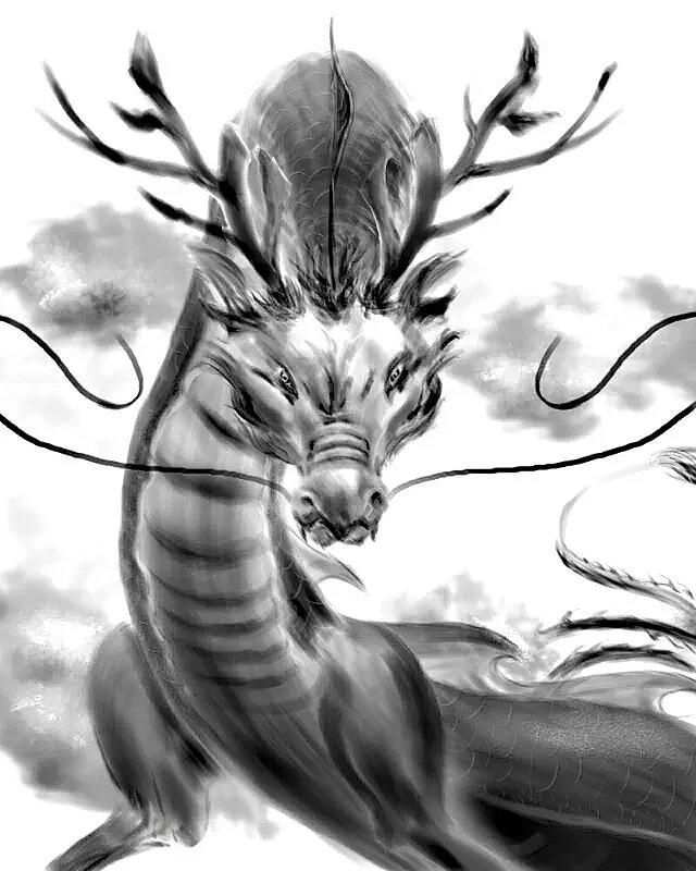 龙素描-霸气龙图片