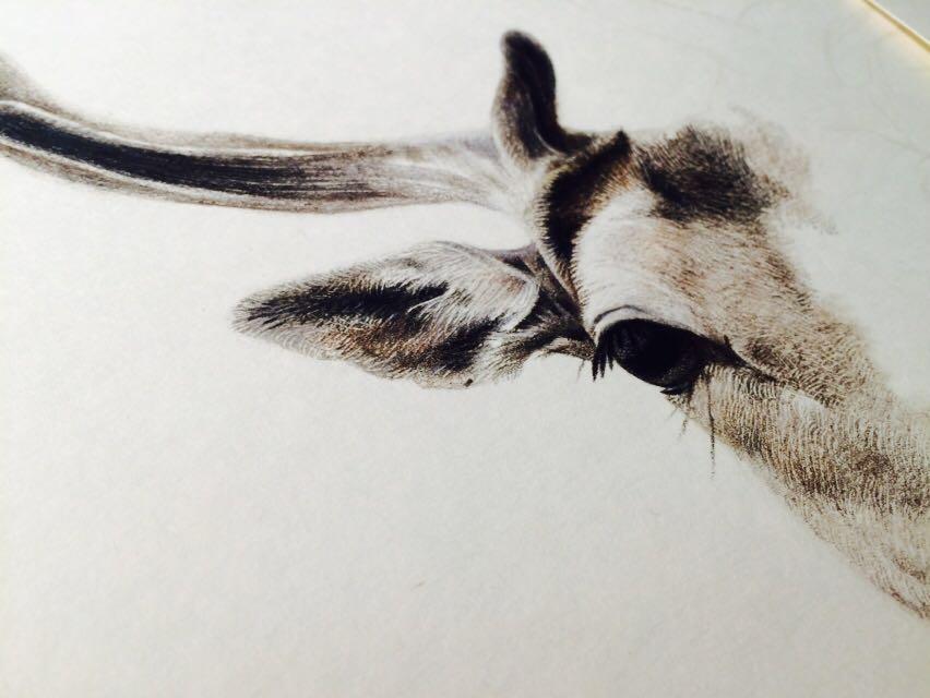 彩铅手绘梅花鹿|彩铅|纯艺术|henry凡