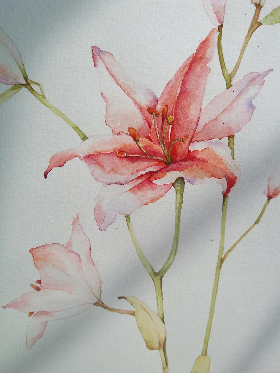 花卉植物-百合花
