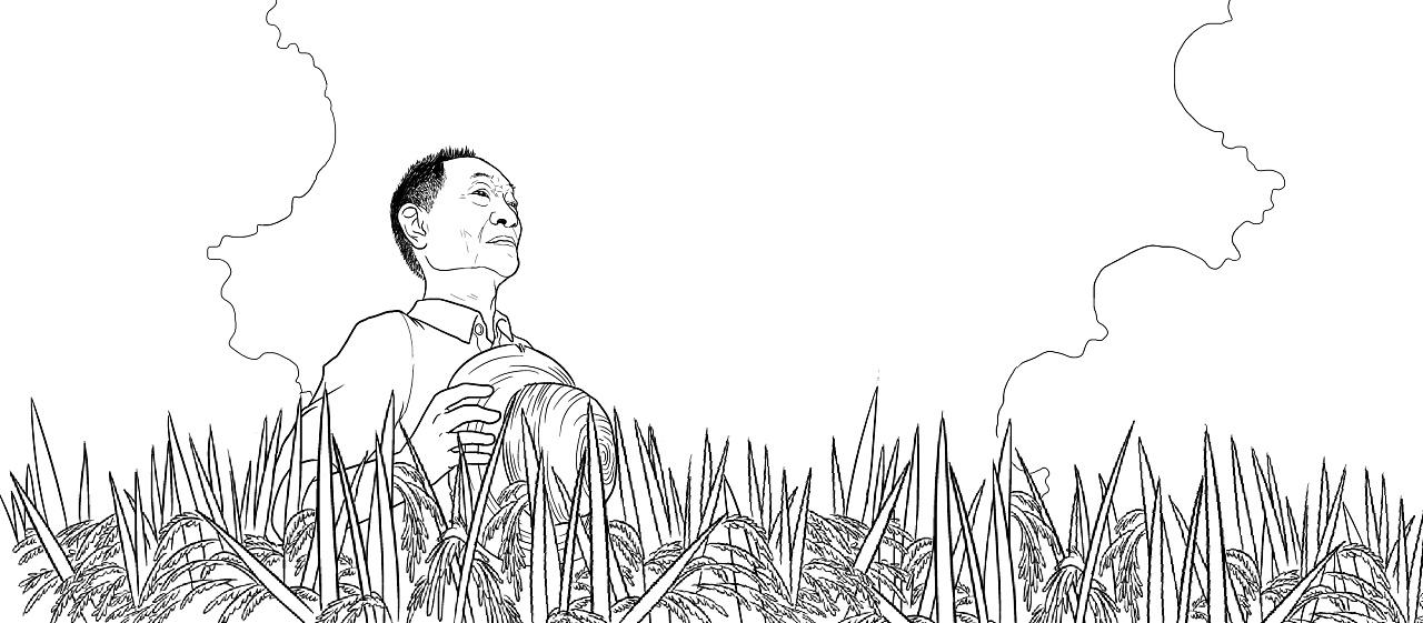水稻图片简笔画