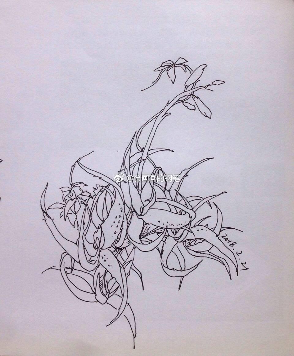 钢笔手绘-阳台的植物|纯艺术|钢笔画|画画使我快乐