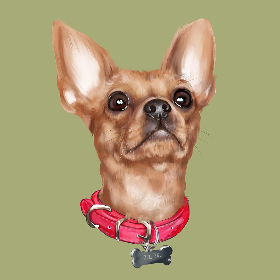 宠物手绘 宠物插画 吉娃娃