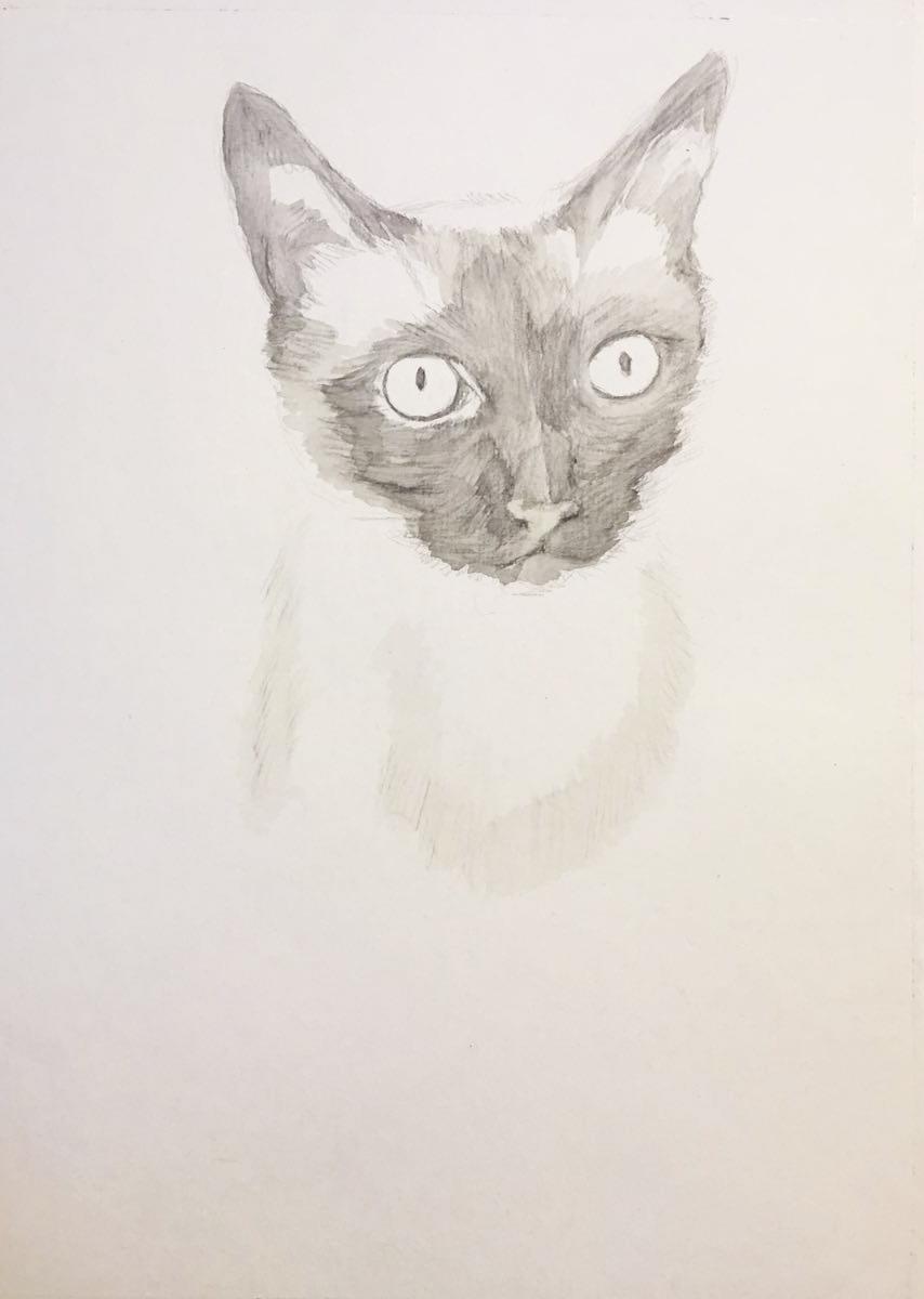 彩铅手绘暹罗bz|彩铅|纯艺术|henry凡