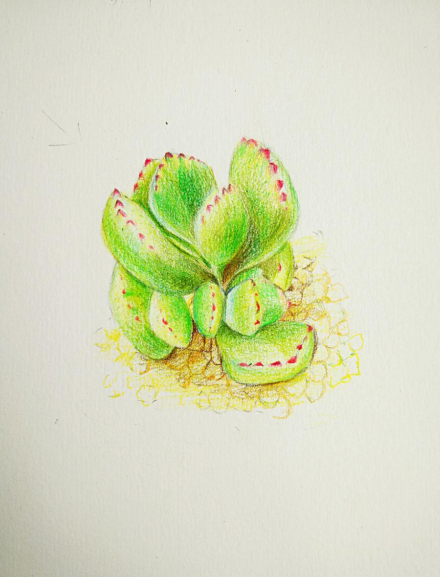 简单彩铅画小清新植物