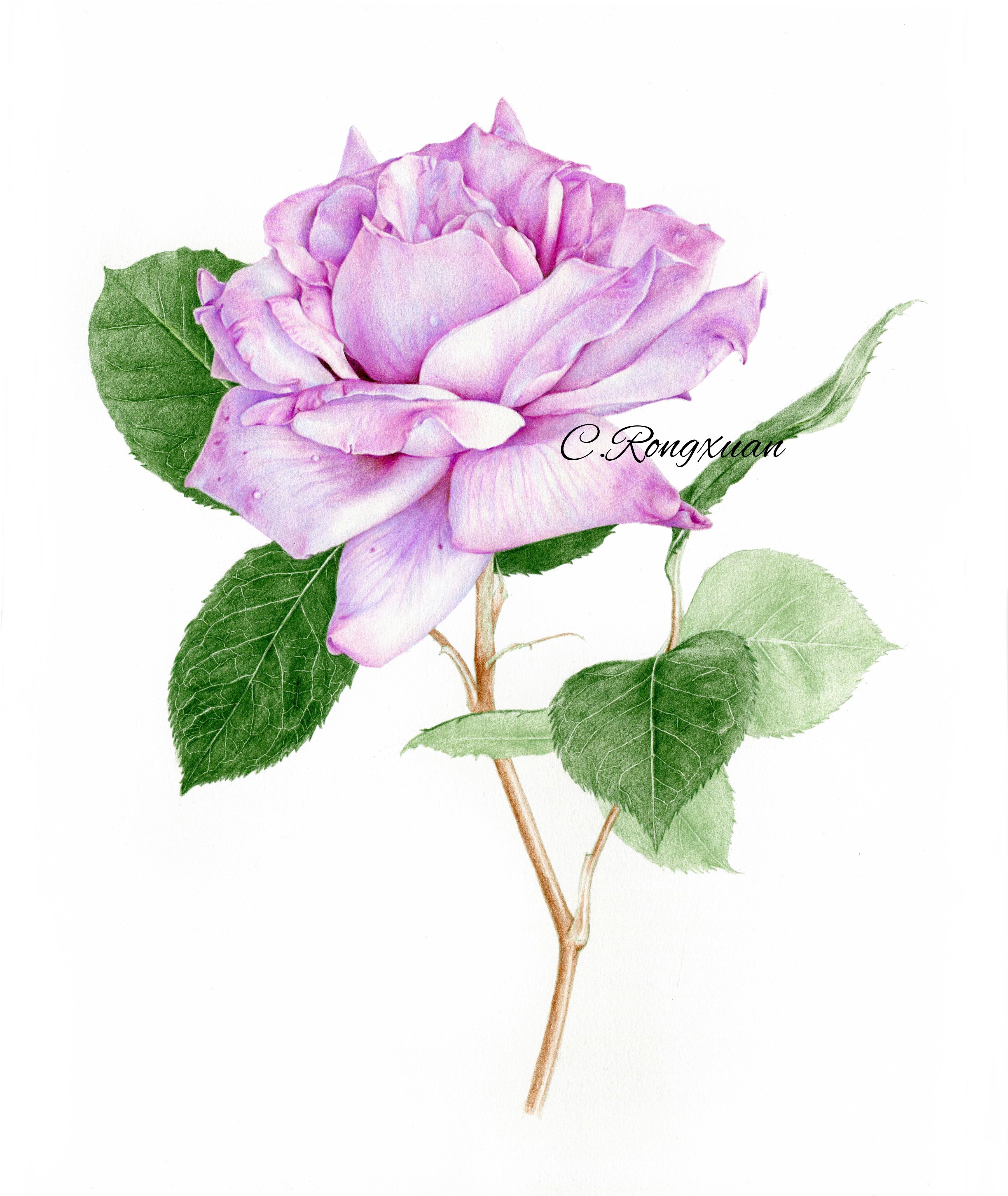 【溶萱手绘】送人玫瑰,手留余香