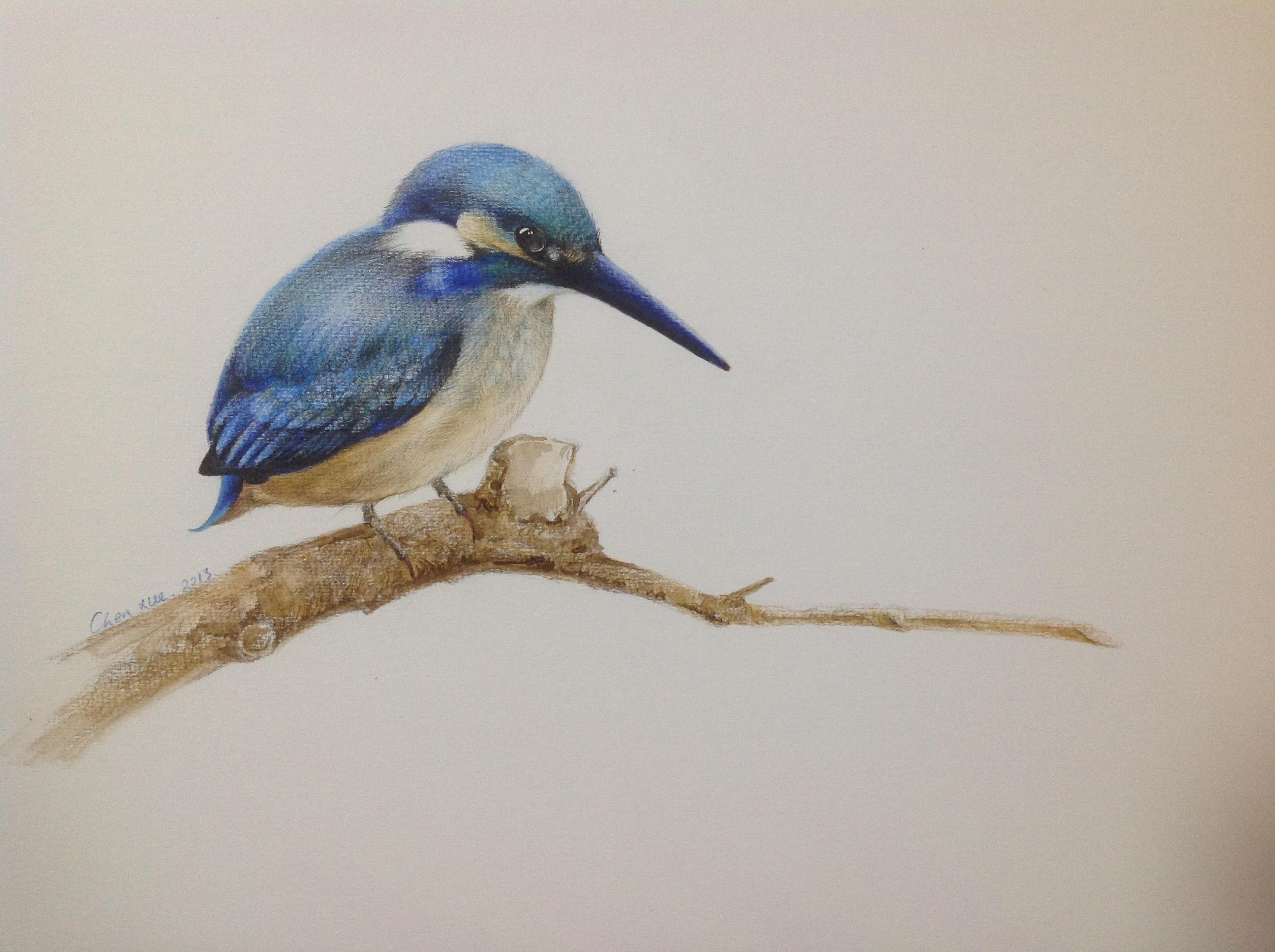 手绘,水彩 彩铅,可爱的小鸟