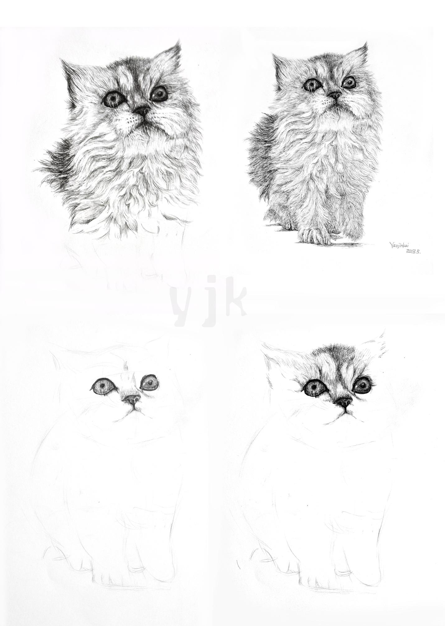 yjk-钢笔画-猫咪