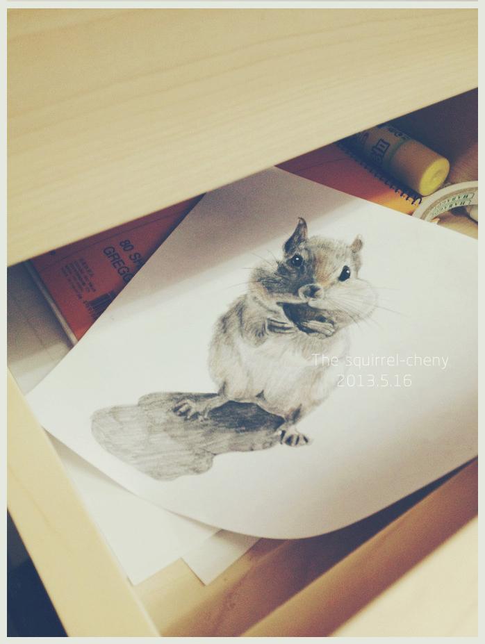 手绘松鼠-自动铅笔 彩铅点缀|插画|其他插画|森林里的
