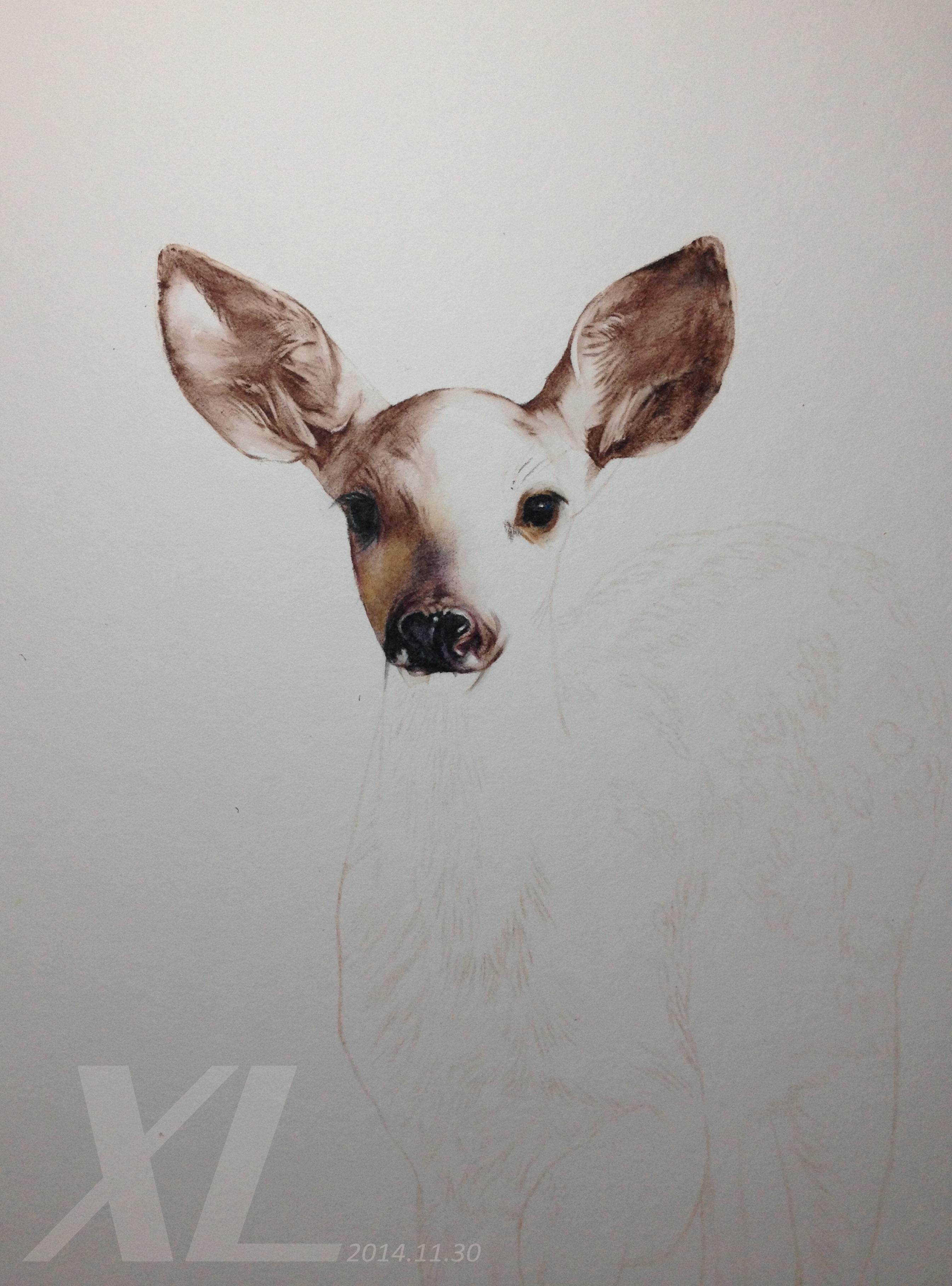 彩铅插画-《小鹿》-xl