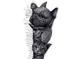 AMUMUS-动物篇手稿