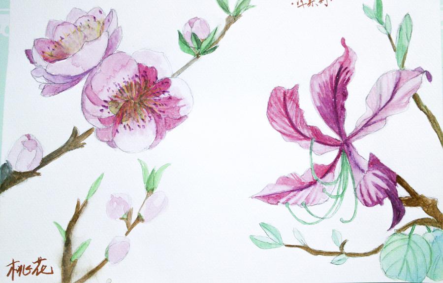 手绘临摹-花朵|绘画习作|插画|catherine916