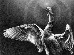 任保海钢笔画绘本《大天鹅一生的七次冒险》