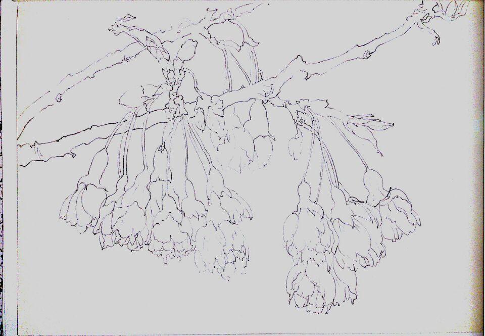 校园植物平面图列手绘
