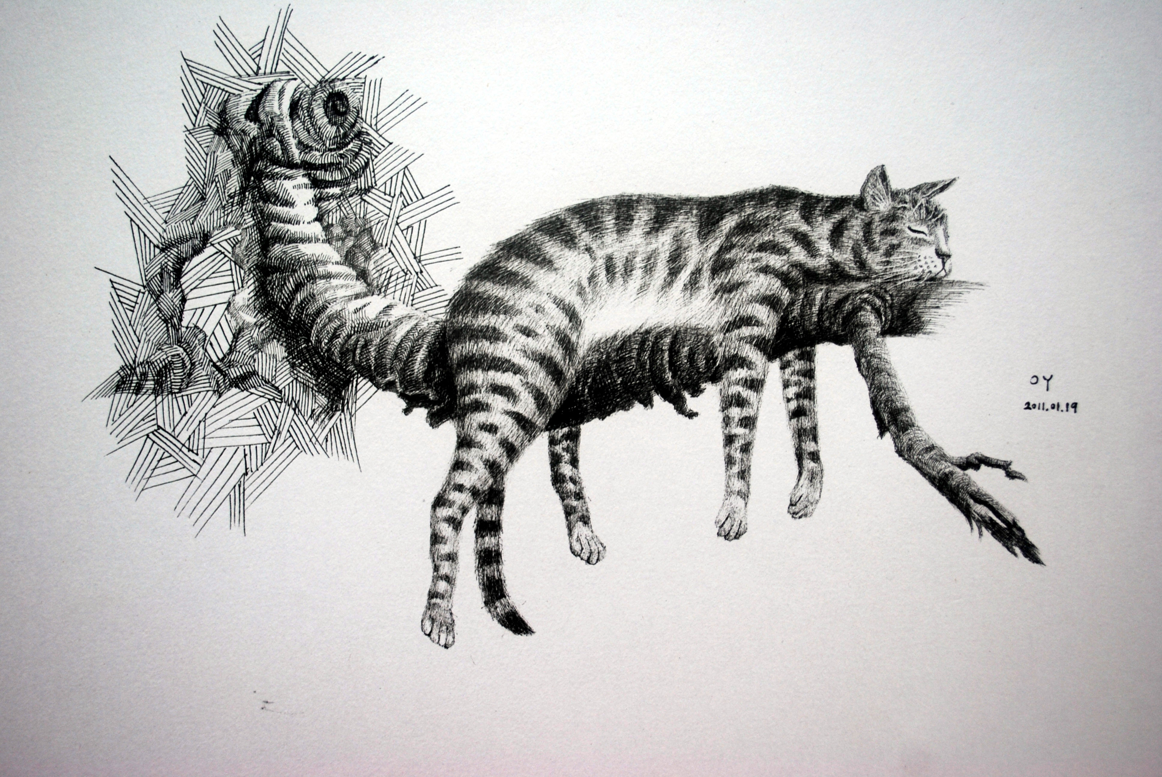oy钢笔画 :猫