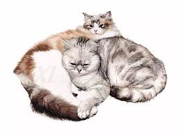 彩铅猫合集-祥雷作品