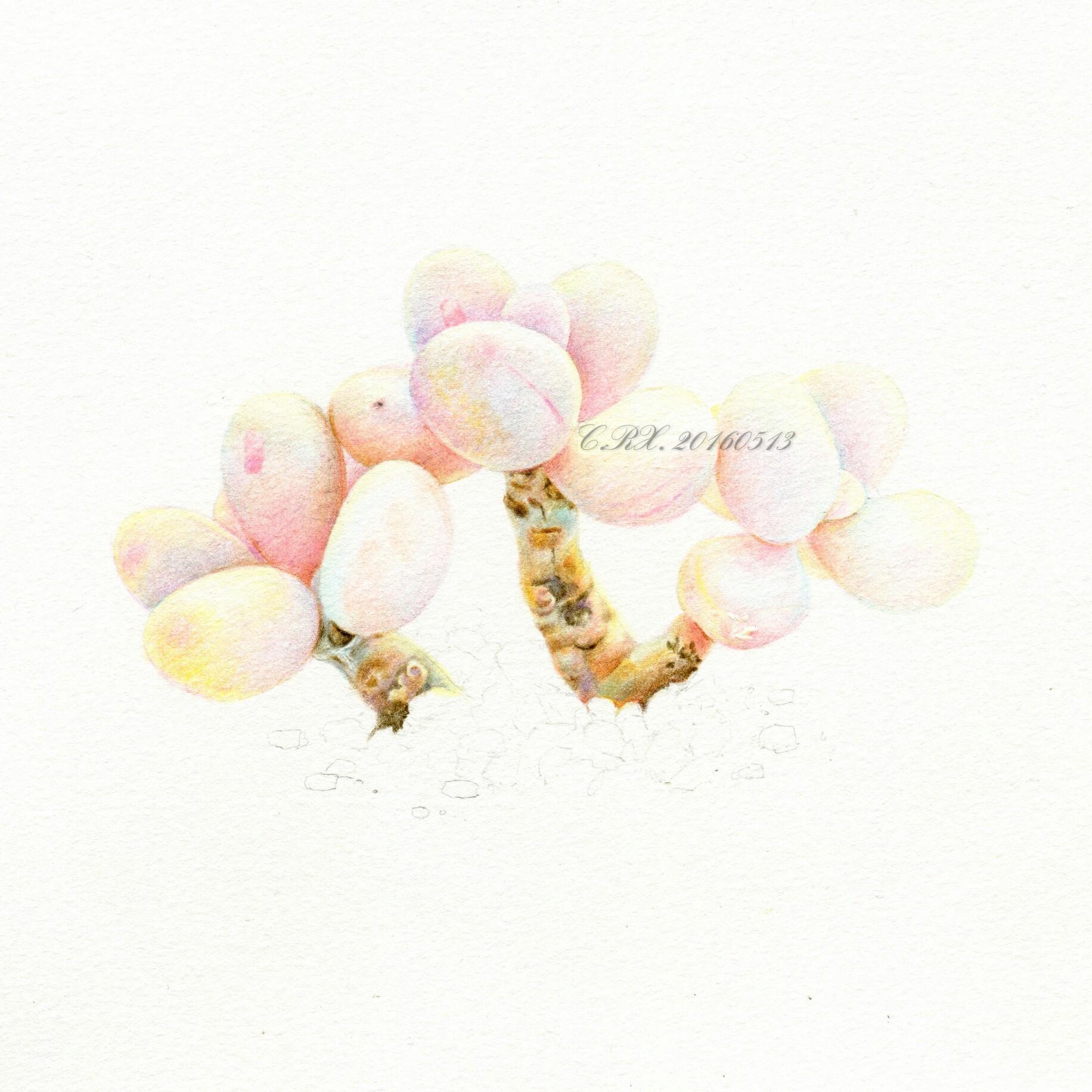 【溶萱手绘——彩铅多肉】桃蛋(ω)