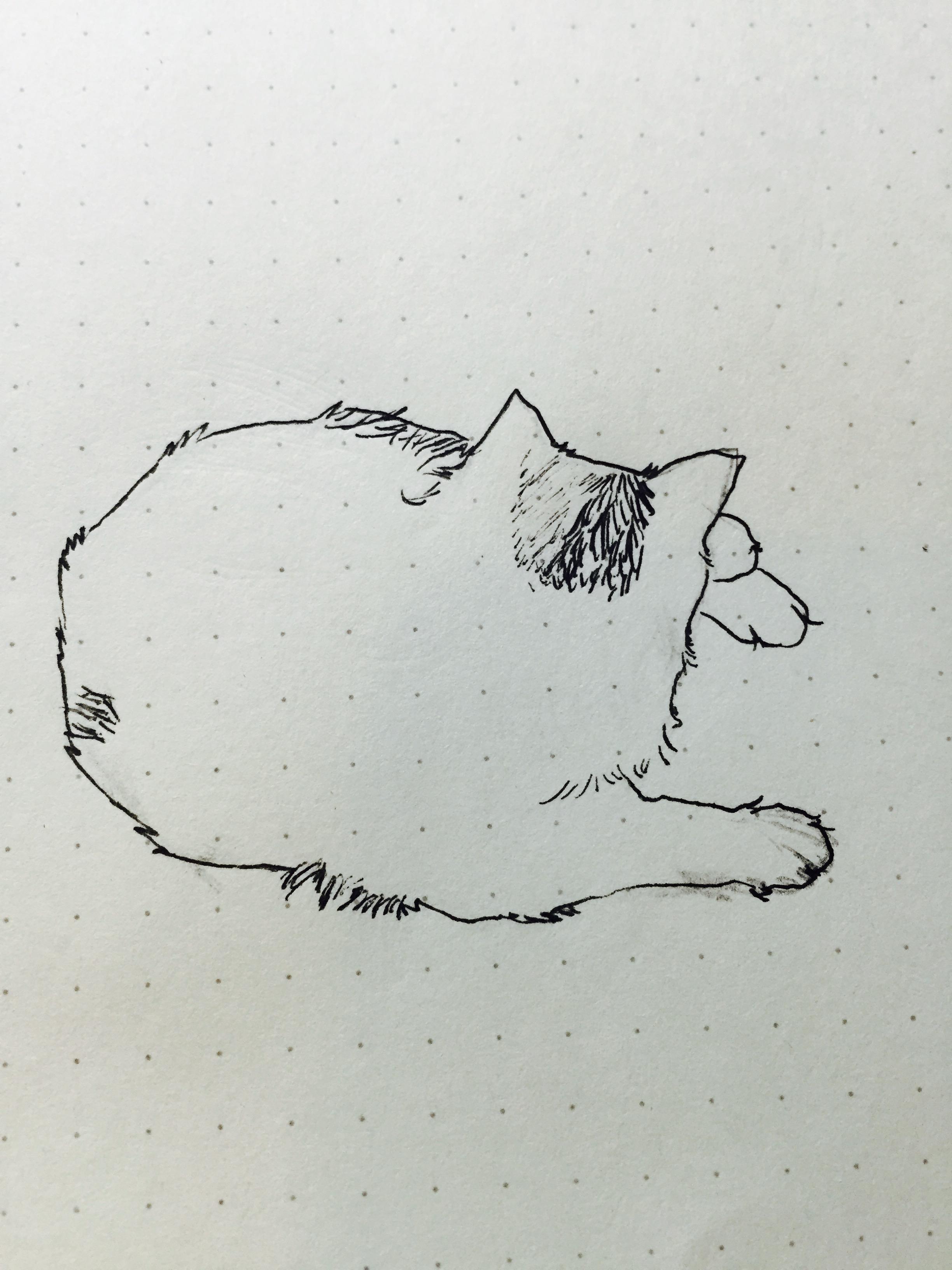 手绘一只胖喵