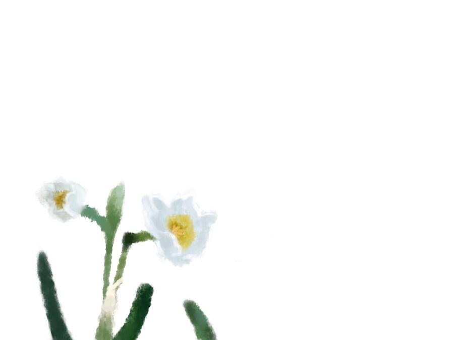 24节气花彩铅手绘图