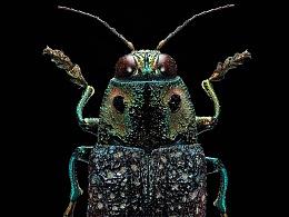 4亿像素的虫子---低成本大像素
