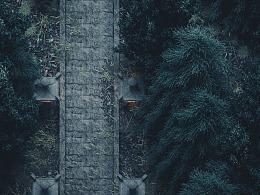 FOREST_REGION_MEDITATION_TRANQUILLITY_NATURE