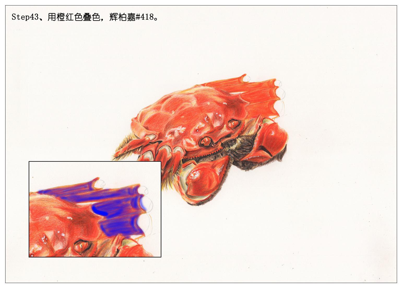 【驴大萌彩铅教程207】手绘美食 大闸蟹