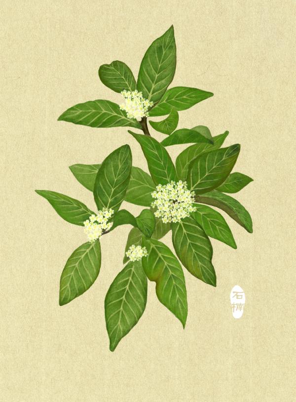 原创作品:手绘植物