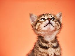 田园猫幼崽