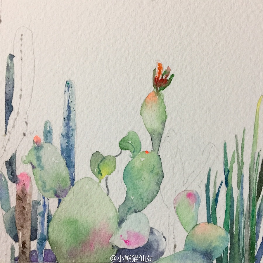 【小熊猫】水彩植物仙人掌手绘教程水彩风景旅行水彩