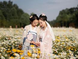 小雏菊的初夏
